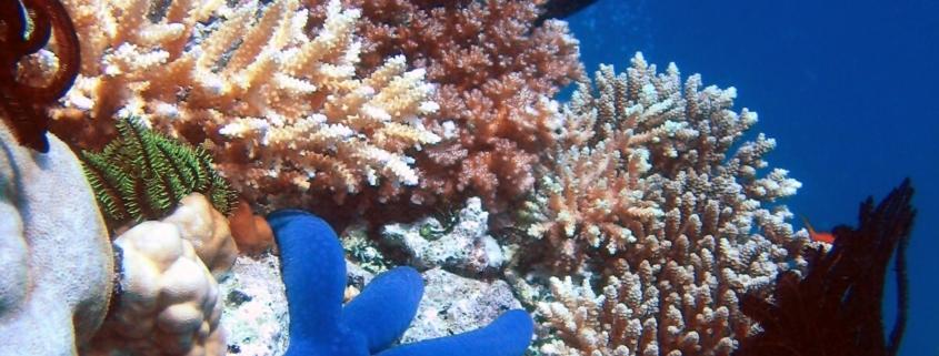 Coral Fantasy